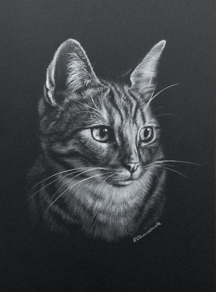 White pencil, The cat's dream 3, 21x30cm, 180PLN