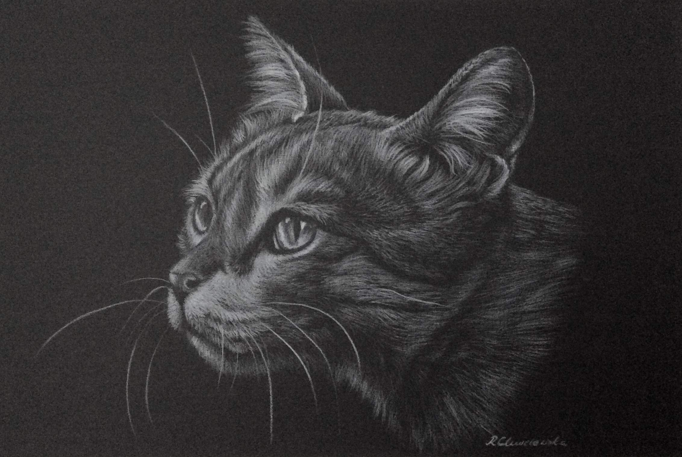 White pencil, The cat's dream 2, 30x21cm, 180PLN