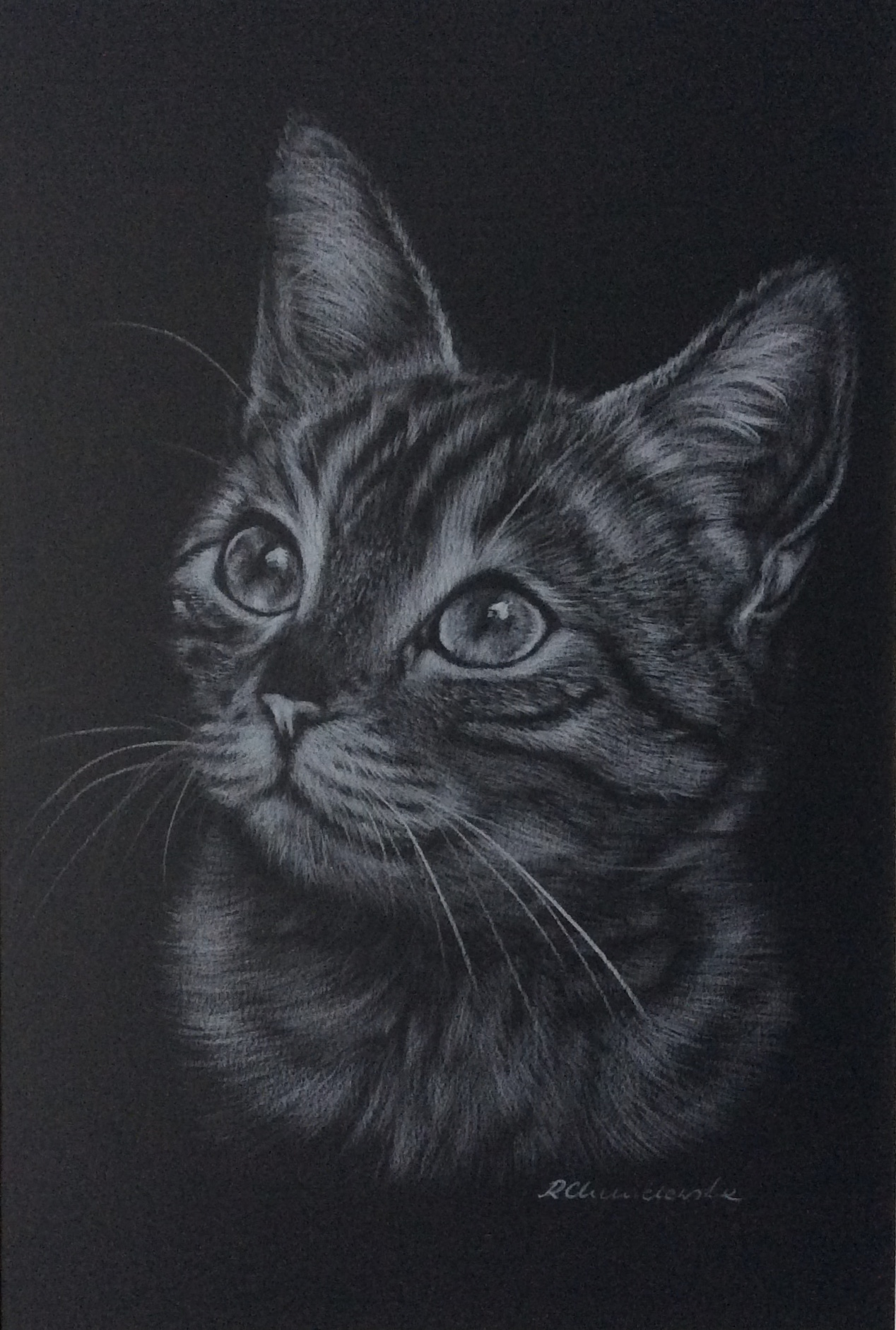 White pencil, The cat's dream 1, 21x30cm, 180PLN