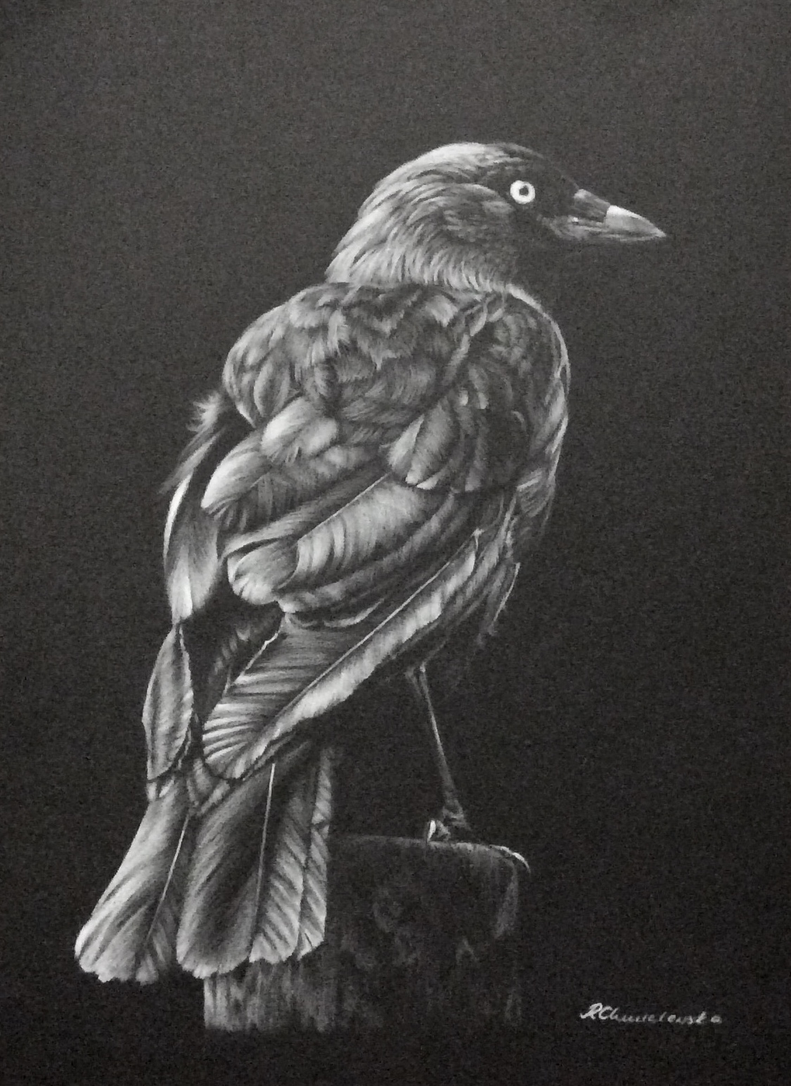 White pencil, Jackdaw, 30x40cm, 300PLN