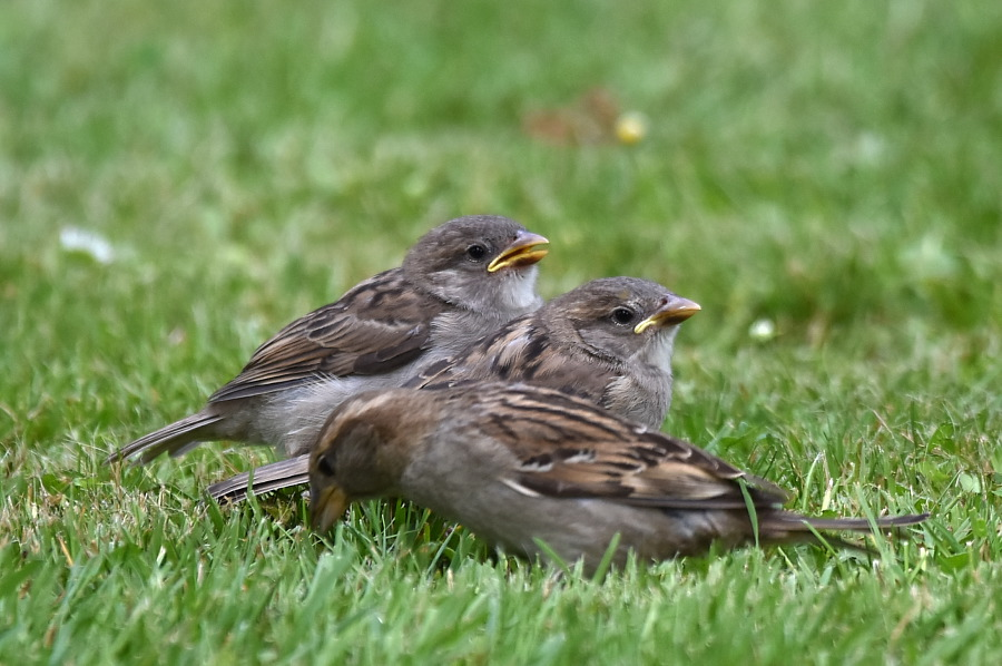 Ptaki Miasta