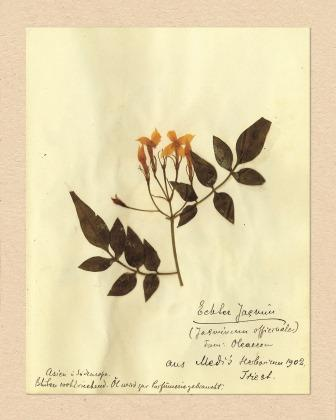A5_Baobab Rosa Luxemburg Zielnik1-404 335_wwwjpg