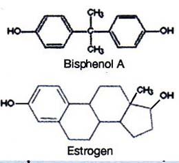 bpa i estrogenjpg