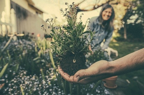 planting-865294_640jpg