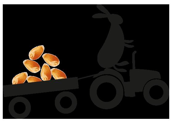 Krolik_traktorpng