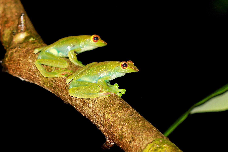 night safarijpg