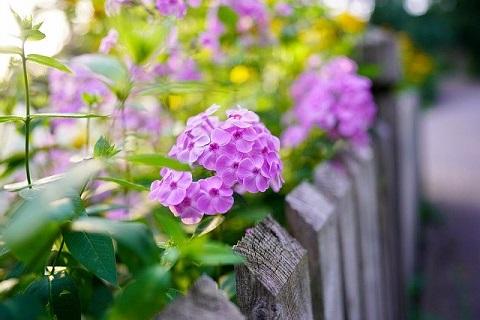 flower-5453072_640jpg